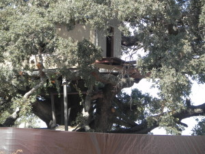 Tree house - closer view